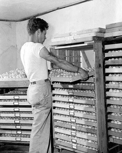 Slow Food: Le uova non saranno mai più trattate così